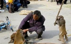 как сделать обезьяну сеошником, дав ей сео-инструмент
