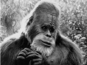 Йети, бигфут, снежный человек, гоминоид