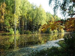 осень, пруд, опята