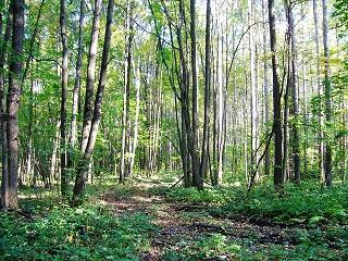 в лес за опятами