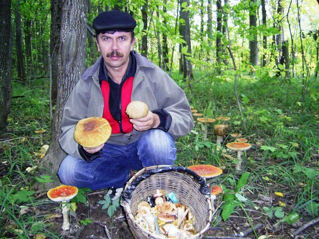 мухоморы и белые грибы