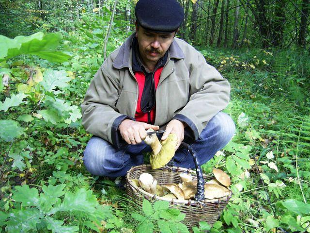 где растут белые грибы